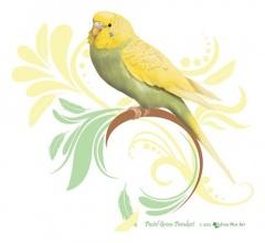 Pastel Green Parakeet