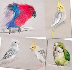 Birdies-02