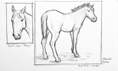 Horse sketches 01