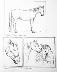 Horse sketches 03