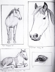 Horse sketches 04