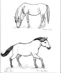 Horse sketches 05