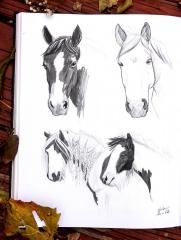Horse sketches 06